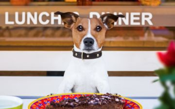 10 restaurantes pet friendly para levar o seu melhor amigo a jantar fora