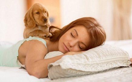 Será que deve dormir com cães? Saiba quais são os prós e contras