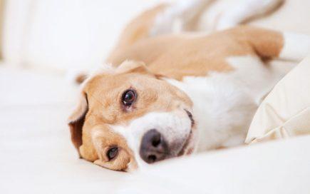 Estudo: pessoas com cães têm um coração mais saudável