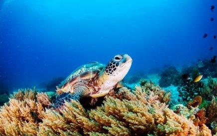 tartaruga no oceano pacífico. é urgente proteger os oceanos