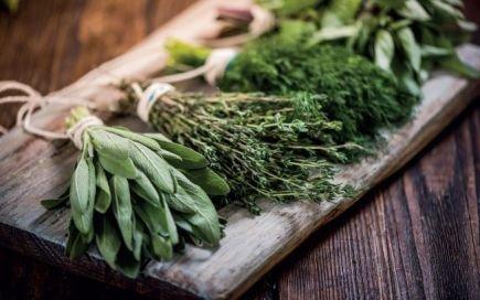 5 regras básicas para cuidar das ervas aromáticas