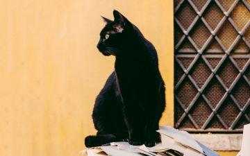 9 superstições que arrepiam mesmo os mais céticos