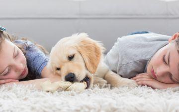 Zooterapia: conheça os novos 'terapeutas' de quatro patas para crianças