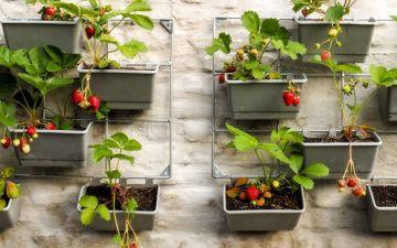 8 passos essenciais para criar uma horta urbana