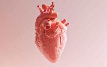 Coração: saiba como mantê-lo saudável e imparável