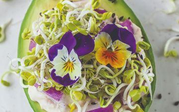 Flores comestíveis: quais são e como tirar maior partido delas