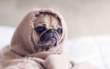 Estará o seu animal de estimação deprimido?