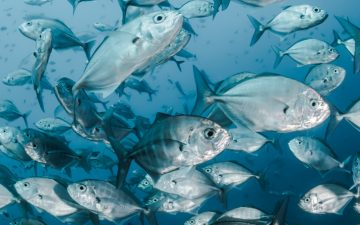 Seaspiracy: Pesca Insustentável, o documentário que quer acabar com o consumo de peixe