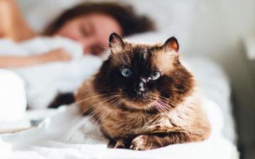 Costuma deixar o seu gato dormir consigo? Descubra alguns benefícios