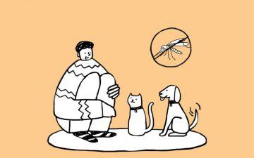 Leishmaniose: tudo sobre esta doença que pode matar o seu animal de estimação