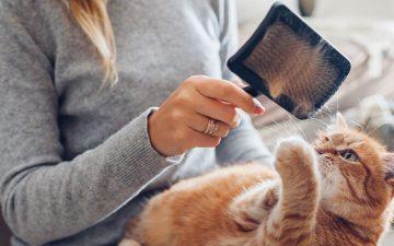Dicas para lidar com a queda de pelo do seu gato